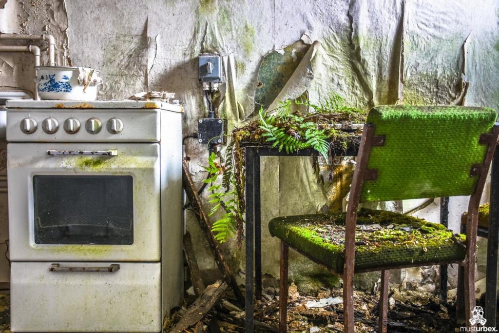 Grand Hotel Atlantis URBEX opuszczony hotel, abandoned hotel, verlassene Hotel, URBEX Biosfera, kuchenka gazowa paproć rosnąca na kuchennym stole zielone krzesło porośnięte mchem opuŝtêny hotel, musturbex