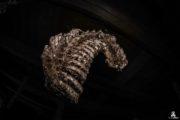 Bone House – URBEX – MustURBEX – 12