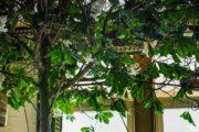 Green_hotel_URBEX_MustURBEX_30